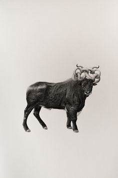 These illustrations show how animals were imagined throughout history - Digital Arts