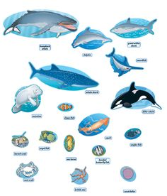 Ocean Food Chain | Student-centered resources, Chang'e 3 and Food ...