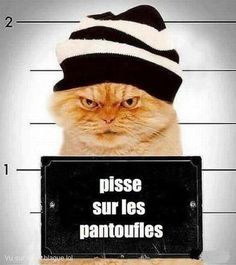 et fait ses griffes sur le canapé lol -this cat pees on my slippers and . Funny Cats, Funny Animals, Cute Animals, Crazy Cat Lady, Crazy Cats, I Love Cats, Cool Cats, Tierischer Humor, Great Jokes