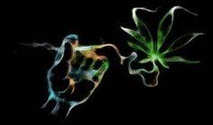 smoking weeds.