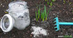 Holzasche als wertvollen Kalium-Dünger nutzen Watering Can, Worlds Of Fun, Vegetable Garden, Gardening Tips, Mason Jars, Life Hacks, Projects To Try, Canning, Flowers