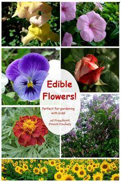 Gardening With Kids: Edible Flowers   Preschool Powol Packets
