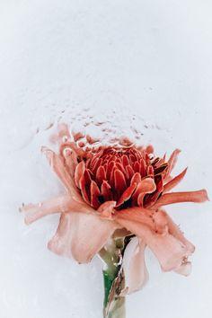 Waterplants By Lisa Sorgini | Trendland