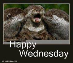 Happy Wednesday (Seals)!