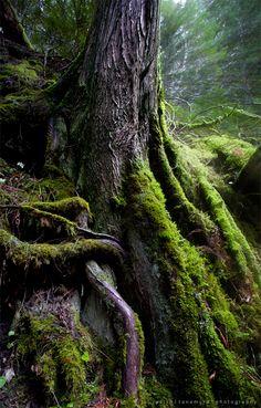 The Roots of Fangorn by jaelise.deviantart.com on @deviantART