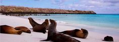 Galapagos Tekne Turu - Jabiroo.com