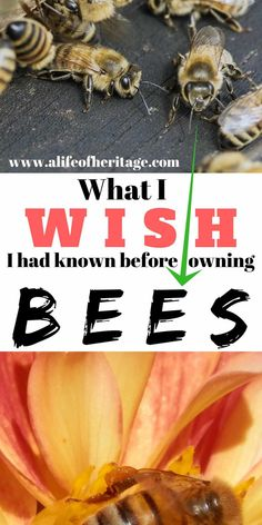 7 Things I Wish I had Known Before Owning Bees Owning bees and beekeeping. What I wish I had known before owning bees. Pop Up Shop, Bee Hive Plans, Beekeeping For Beginners, How To Start Beekeeping, Raising Bees, Bee Boxes, Backyard Beekeeping, Farms Living, Bee Happy