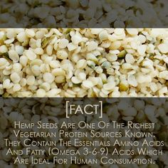 Do You Know How Healthy #HempSeeds Are For You? #Hemp #Omega369 #HempHealth  #PureHemp #HempOil