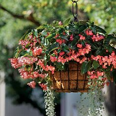 Begonias & Dichondra - Spectacular Container Gardening Ideas - Southern Living