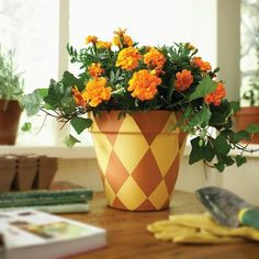 Flowers in painted terracotta pot.