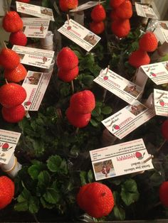 Kindertraktatie. Aardbeienplantje van de Aardbeienacademie, 2 mooie en lekkere aardbeien op een prikker en een handleiding in jip-en-janneketaal  www.aardbeienacademie.nl