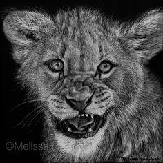 Lion Cub | 5x5 scratchboard | Melissa Helene Fine Arts www.melissahelene.com #artwork #art #scratchboard #scratchart #wildlife #animalart #lion #lioncub #bigcat #cat #catart #blackandwhite #melissahelene