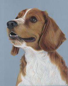 Welsh Springer Spaniel 'Yuma' Pet Portraits by Donna