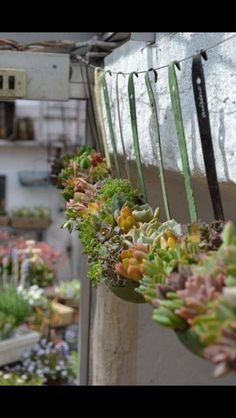 Succulents in ladles! Lovely!