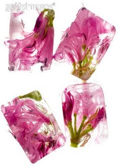 """Mi casita """"Todoenchuches"""": Cubitos de hielo con Flores"""