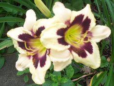 One of my garden Lilies - Stitch Witchery or Witch Stitchery...somethin like that  :)