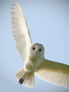 "* * "" Lucky to beez wild and free - - dat tattoo craze would startz wif pet birds I betz."""