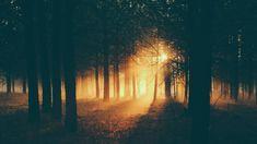 Sunlight in the foggy forest Computer Screen Backgrounds, Desktop Background Images, Desktop Pictures, Computer Wallpaper, Desktop Wallpapers, Forest Photography, Tumblr Photography, Active Wallpaper, Wallpaper Dekstop