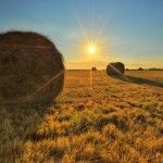 """Picture of the Day: """"Morning on the Farm"""""""