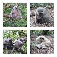 Monkeyland, Plettenberg Bay, South Africa | One Footprint On The World Port Elizabeth, Garden Route, Footprint, Kangaroo, South Africa, Exploring, Eco Friendly, Activities, Fun