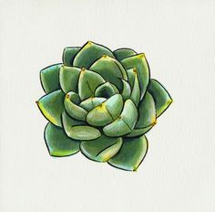 succulent drawing - Google Search