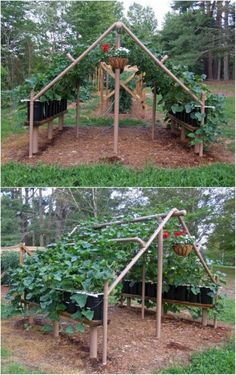 Expert Gardening Tips, Ideas and Projects that Every Gardener Should Know PVC cucumber trellis. This is definately going to be in my back yard:PVC cucumber trellis. This is definately going to be in my back yard: Veg Garden, Vegetable Garden Design, Garden Types, Garden Trellis, Edible Garden, Bean Trellis, Tomato Trellis, Grape Vine Trellis, Chicken Garden