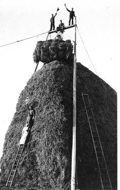 Celebrating on a finished haystack, Cornfalfa Farms, Waukesha County, Wisconsin, 1913.    According to the information provided with the image, this haystack was approx. 40 feet tall.  via: New Berlin Historical Society
