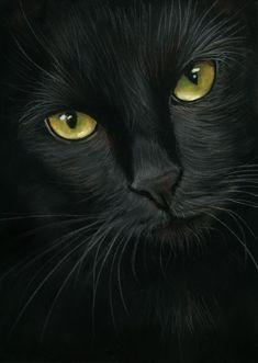 Gezeichnete Katze Mehr