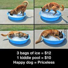 3 bags of ice = $12.00 - 1 kiddie pool = $10.00 - Happy Dog = Priceless aka Pure Happiness ~ Dog Shaming shame - German Shepherd - Pure Joy