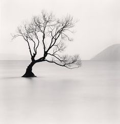 Wanaka Lake Tree, Study Otago, New Zealand. 2013 minimal photography by Michael Kenna Minimal Photography, Landscape Photography Tips, Tree Photography, Artistic Photography, Black And White Photography, Urban Photography, Color Photography, Photography Blogs, Iphone Photography