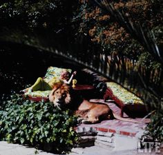 vintage everyday: Living with a Lion, ca. 1970s