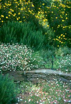 Groupe Derbez Lavender Garden, Country Estate, French Country, Stepping Stones, Vineyard, Outdoor Decor, Plants, Ideas, Home Decor