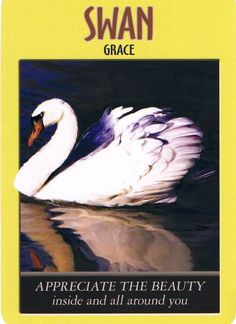December 29, 2014- Swan-Grace- from power Animal Oracle Cards by Steven Farmer. Message: Appreciate The Beauty inside and all around you.  Don't judge what you see or experience as good or bad; instead, appreciate the precious uniqueness of the diverse elements that make up this wonderful world in which we exist. Mother Earth is your true mother-you're birthed from her through your biological mother. Appreciate Mother Earth's beauty along with your own!