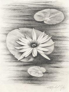 Lilypads original drawing by michaeljehn on Etsy