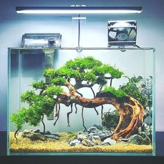 Underwater bonsai tree❓ YES❗️ Like this one created by indonesian aquascaper Nickson Marpaung 🇮🇩. Planted Aquarium, Aquarium Aquascape, Aquarium Nano, Aquarium Terrarium, Aquarium Landscape, Aquarium Setup, Nature Aquarium, Aquarium Fish Tank, Aquascaping Plants