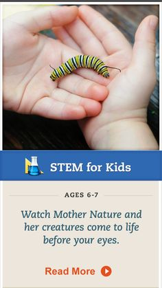 Your child can observe the life cycle of a butterfly and more #science by creating a butterfly garden. Click for details. #STEM