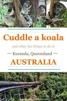 The Kuranda Scenic Railway, Skyrail Rainforest Cableway, and Koala Gardens--where you can cuddle a koala--are among the many attractions in Kuranda. New Zealand Itinerary, New Zealand Travel, New Zealand Campervan, Roadtrip Australia, Chemical Engineering, Electrical Engineering, Queensland Australia, Alternative Energy, Solar Energy