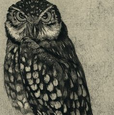 'Burrowing Owl' by Stephanie Martin