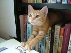 """** """" Me justs noticed. Yer bod may be a temple, but it be a lot delapidated. Dat be fer cursin' me outz, justs cuz me cat-crashed behind yer books."""""""