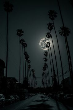 L.A. Night ~ By Timo Saarelma