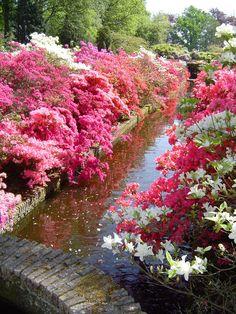 BlankenWH - Lisse, Keukenhof flowershow