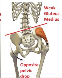 Research review: Study investigating the correlation non-specific low back pain and gluteus medius weakness. Synopsis, summary, strengths, weaknesses, impact on practice, relevance and practical application.