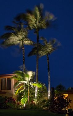 project spotlight tropical outdoor lighting in maui palm trees