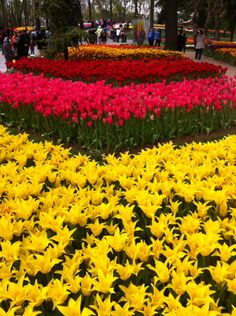 #Turkey #Istanbul #travel #lale #tulip #festival Istanbul Travel, Tulip Festival, Love Flowers, Tulips, Illusions, Garden, Modern, Plants, Garten