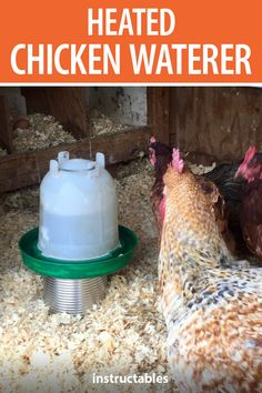 With a few inexpensive supplies you can make a heated chicken waterer so they stay hydrated even in the winter cold. Heated Chicken Waterer, Chicken Water Feeder, Chicken Feeders, Water Feeder For Chickens, Backyard Chicken Coop Plans, Chickens Backyard, Raising Ducks, Raising Chickens, Chicken Coop Winter
