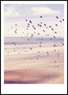 photo art poster with birds flying over a shimmering desert in sunrise Window Poster, Poster Mural, Kunst Poster, Poster Prints, Nature Posters, Love Posters, Beautiful Posters, Wall Posters, Retro Posters