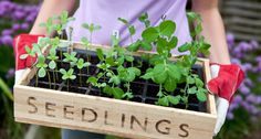 7 Reused Items to Boost Your Garden