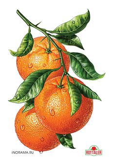 http://illustrators.ru/illustrations/690867_original.jpg