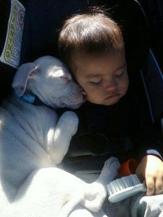Funny Animal Pictures - View our collection of cute and funny pet videos and pics. New funny animal pictures and videos submitted daily. So Cute Baby, Adorable Babies, I Love Dogs, Puppy Love, Cute Baby Animals, Funny Animals, Animals Dog, Cute Puppies, Cute Dogs