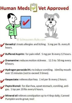 does benadryl constipate dogs